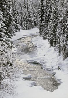 ✯ North Saskatchewan River, Banff
