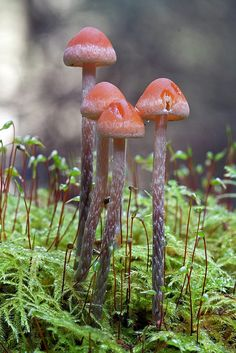 Unknown Fungi ~By Steven Murray