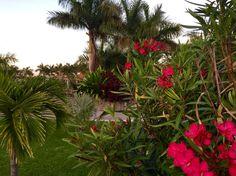 Exotics and tropical flowers in Marina Plata areas.Hermosos jardines con flores exóticas y tropicales en Marina Plata.