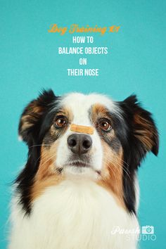 DOG TRAINING & PLAY: HOW TO TEACH A DOG TO BALANCE THINGS ON ITS NOSE