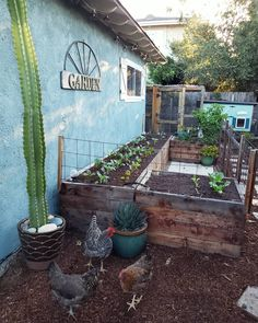 """Deanna ~ Central Coast of CA on Instagram: """"🌵The kale trees are gone, little brassicas and greens are maturing in their place, and I'm over here looking at this damn cactus like…"""" Vegetable Garden, Garden Plants, Raised Garden Beds, Raised Beds, Chicken Garden, Urban Chickens, Future Farms, Closer To Nature, Garden Inspiration"""