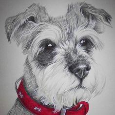 #pet #portrait #sketch #bespoke #schnauzer #commission piece for a friend last year.