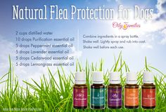 All Natural Flea Tick Protection for Dogs to learn more about these oils visit www.essentialoillover.com #essentialoillover