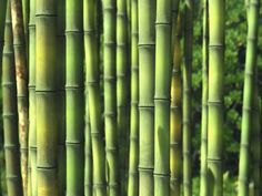 A Collection of the Best Bamboo Blogs. Get the Top Stories on Bamboo in your inbox
