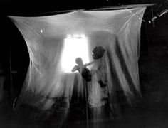 Malaria cases in Africa dropped after the introduction of  bed nets, because the malaria-carrying mosquitoes fly and bite by night. The bed nets may have prevented up to 1 million deaths in Africa.    But the nets may be useless against a possible new species of malaria-carrying mosquito that bites humans earlier in the evenings – long before people retire to their beds. It was found in Kenya by a team led by Jennifer Stevenson at the London School of Hygiene and Tropical Medicine.