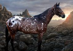Snowflake in a rocky landscape: Horse- Flying Free - http://naturalequestrian.tumblr.com/post/59245388234