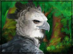 American Harpy Eagle   More from ~ Algren-Hayabusa