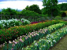 Floks, Cynia, Eustoma ogród.  Zdjęcia z miejsca 4.bp.blogspot.com