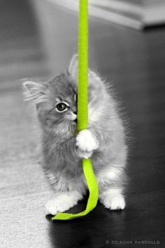 black and white photos of cats with a pop of color - Google Search