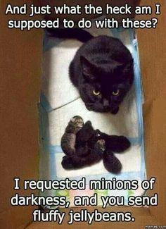 I asked for minions not fluffy jelly beans.