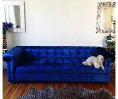 love the blue couch