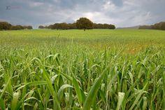 Wonderfull field