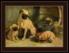 Vintage prints | Vintage English Print Pug Dog Mother and Puppies Art Picture