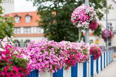 Jak ukwiecić miejsca trudno dostępne? - Inspirowani Naturą City Furniture, Modern City, Flower Boxes, Cities, Plants, Bridges, Basket, Decor, Self