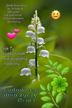 Herbs, Plants, Good Morning, Herb, Plant, Planets, Medicinal Plants