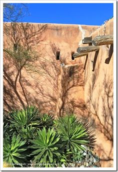 Succulents and More: 12/30/15: DeGrazia Gallery in the Sun, Tucson, AZ (part 2)