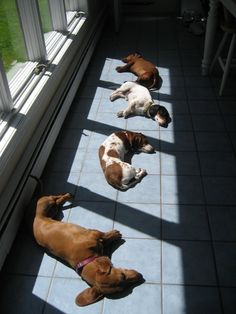 solar-powered doxies