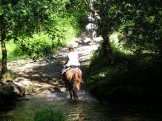 Camino in Galicia