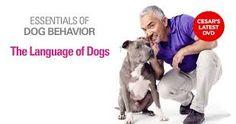Cesar Millan - The Language of Dogs - Essentials of Dog Behavior DVD Series…