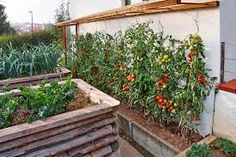Bildergebnis für tomaten abdeckung selber bauen