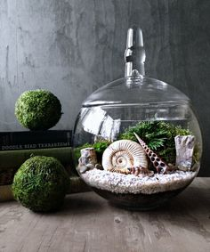 Ammonite Fossil Orb Terrarium Snail Shell by DoodleBirdie on Etsy