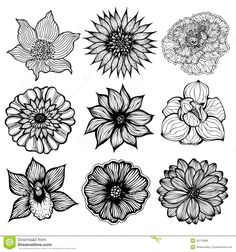 21 black and white flowers clipart vectors download free vector set of flowers download from over 56 million high quality stock photos images vectors sign up for free today image 42710068 mightylinksfo