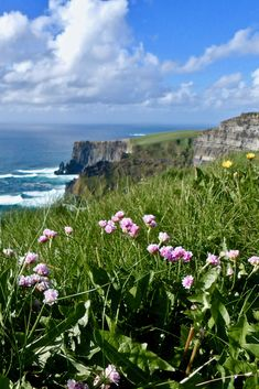 Brave, blooming flowers atop the windswept Cliffs of Moher | For more information on visiting the Cliffs, check out the Ireland Travel Guide on TheRoadTaken2.com #cliffsofmoher #ireland #travel