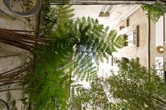 Terrasse parisienne - Olivier Olindo Architecte
