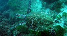 . Scuba diving facilities in Costa Rica are world class and professional PADI , Discover some marine natural beauties