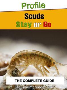 Scuds In Shrimp And Fish Tank Shrimp Tank, Fish Tanks, Snail, Cool Pictures, Aquarium, Knowledge, Pets, Goldfish Bowl, Aquariums