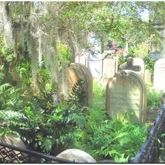Charleston SC cemetaries....I've always been fascinated by cemetaries and the history.