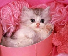 Kitty in pink