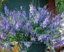 Sieberz S.R.L   Plantele cele mai frumoase pentru grădina şi terasa Dumneavoastră !