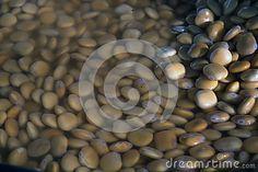 Pickles. As pickle bean.  Production of bean. Spanish bean. To pickle bean. Traditional Spanish cuisine. Altramuces.