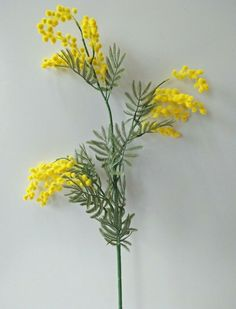 1 x Australian native Golden Wattle Stem. We are the leader in bridal flowers in Australia. We have many artificial flowers, candles, bridal bouquets, artificial flowers and trees available. Australian Native Flowers, Australian Plants, Small Yellow Flowers, Diy Flowers, Australian Tattoo, Plant Tattoo, Botanical Prints, Watercolor Flowers, Flower Art