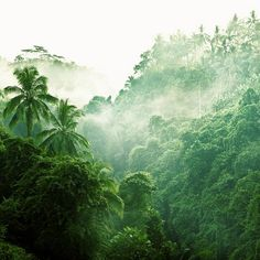 Cuban rainforest. Andrew Smith