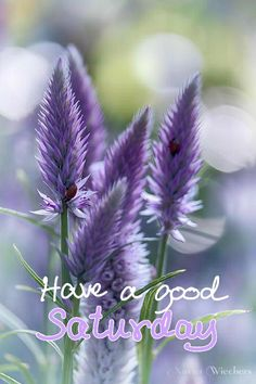 Sunday Morning Quotes, Good Morning Greetings, Good Morning Flowers, Good Morning Images, Happy Weekend, Happy Saturday, Saturday Images, Days Of Week, Good Day