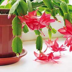 Co dělat s pokojovými rostlinami, když odkvetou?