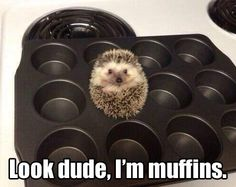 Jawn! Get out of the pan or Mycroft will eat you! <<< that comment.