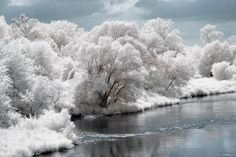 Snow (an infrared picture that makes the trees look like it's laced with snow, pretty neat)