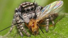 Spiders top the global predator charts - BBC News