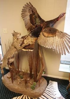 Safari Life Taxidermy is selling this Life Size Bobcat and Turkey mount.  See ad link for details.