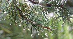 After the rain. Rain Drops, Plants, Plant, Planets