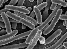 Las células con mayor presencia en el organismo son los microbios. Sí, bacterias, hongos y demás seres vivos que cohabitan con nosotros y de...