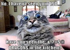 funny cat - Pesquisa Google