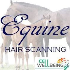 Find out about how your horse's genes are switched on and off ('gene expression') . It's the science of epigenetics. 26 page OPTIMISE EQUINE report.
