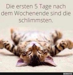 The first 5 days after the weekend are the worst funny pictures - Freitag Wochenende - Humor Kittens Cutest, Cats And Kittens, Cute Cats, Funny Cats, Funny Jokes, Animals And Pets, Funny Animals, Cute Animals, Warrior Cats
