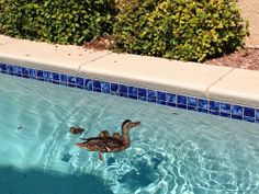 They have hatched, the rest are on the way. #poolparty #poolservice #poolpets