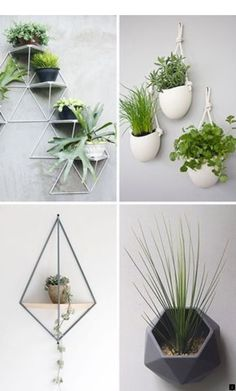 10 Modern Wall Mounted Plant Holders To Decorate Bare Walls 10 Modern Wall Mounted Plant Holders To Decorate Bare Walls,home sweet home Here are 10 examples of stylish and modern wall mounted planters that. Indoor Garden, Indoor Plants, Home And Garden, Garden Modern, Garden Planters, Plant Wall, Plant Decor, Wall Mounted Plant Holder, Room Decor