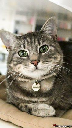 Kansas prend la pause - vedette de notre CONCOURS Photo mensuel chat, chien, animaux. participez ici >> http://www.verlina.com/concours-photo.php